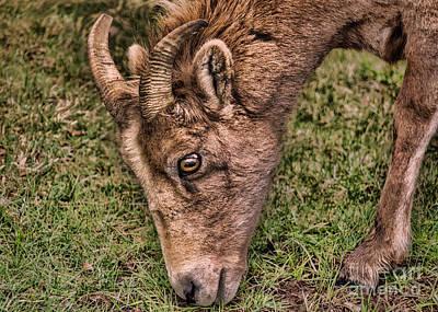 Photograph - Big Eyes, Small Horns by Janice Rae Pariza