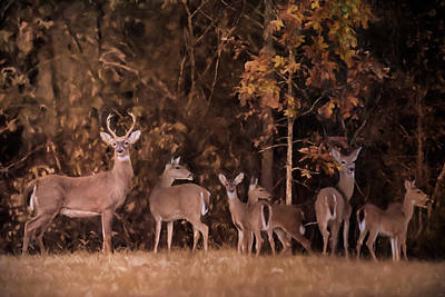 With Texture Painting - Big Family Whitetail Deer Art by Jai Johnson