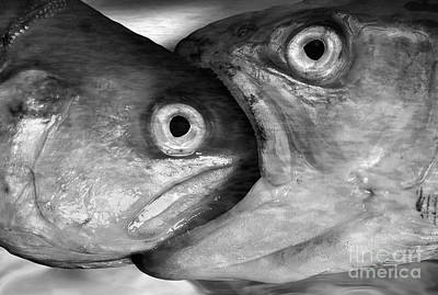 Big Fish Eat Small Fish Art Print