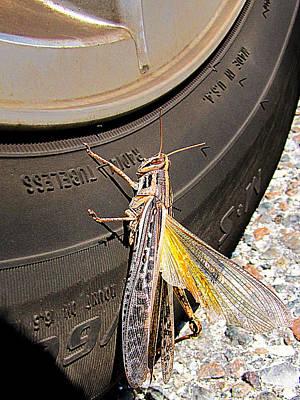 Photograph - Big Grasshopper 1  by Chris Mercer