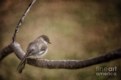 Photograph - Big Headed Flycatcher by Linda Blair