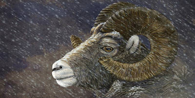 Big Horn In Snowstorm Art Print