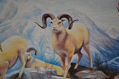 Painting - Big Horn Sheep  by Anne-elizabeth Whiteway
