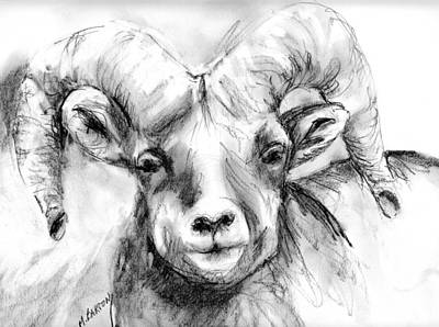 Drawing - Big Horn Sheep by Marilyn Barton