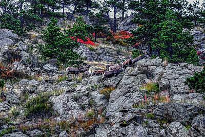 Photograph - Big Horn Sheep by Marilyn Burton