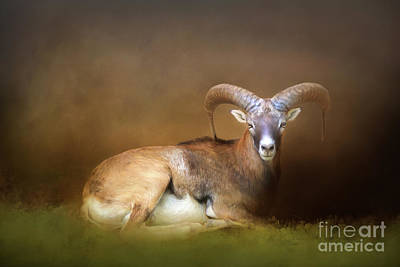 Photograph - Big Horn Sheep by Marion Johnson