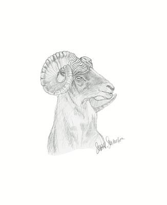 Drawing - Big Horn Sheep by Sara Stevenson