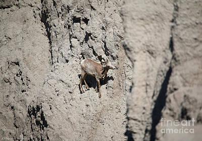 Photograph - Big Horn by Susan Herber