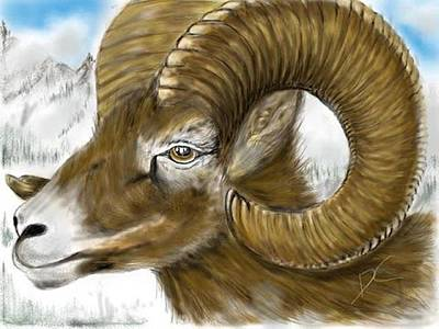 Digital Art - Big Horned Sheep by Darren Cannell