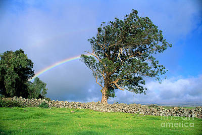 Photograph - Big Island Rainbow by Peter French - Printscapes