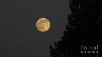 Photograph - Big Leaf Moon by Janice Westerberg