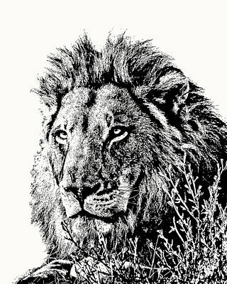 Photograph - Big Male Lion Portrait by Scotch Macaskill