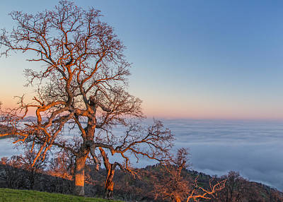 Winter Animals Royalty Free Images - Big Oak Above Fog At Sunrise Royalty-Free Image by Marc Crumpler