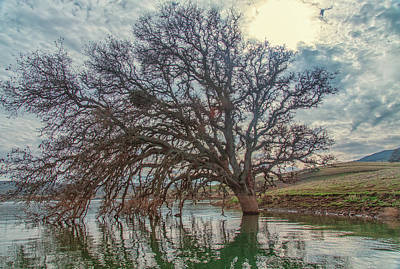 Photograph - Big Oak In Water by Marc Crumpler