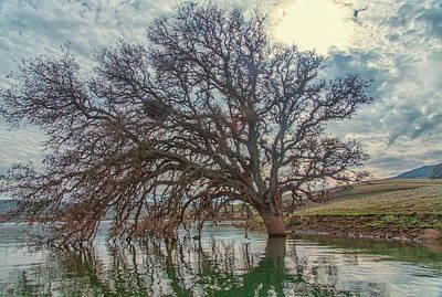Photograph - Big Oak In Water by Marc Crumpler