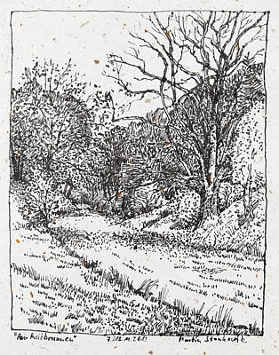Drawing - Big Oak, Landscape Drawinh In Ink by Martin Stankewitz