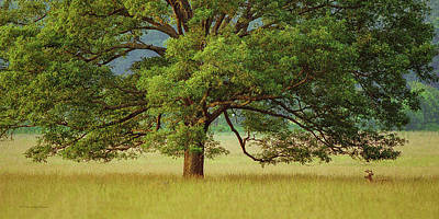 Photograph - Big Oak by Timothy Harris