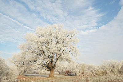 Photograph - Big Oak Tree In Hoar Frost Winter Landscape by Martin Stankewitz