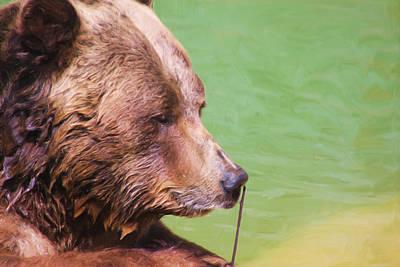 Big Old Bear With A Tiny Stick Art Print by Karol Livote