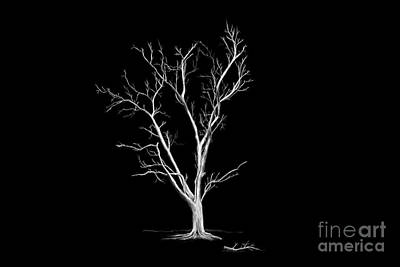 Digital Art - Big Old Leafless Tree by Jan Brons