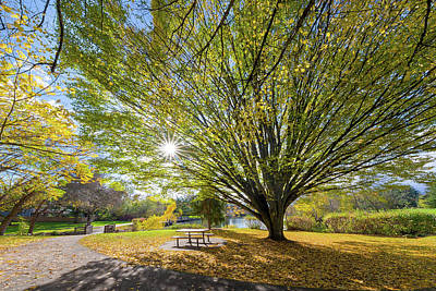 Photograph - Big Old Tree At Commonwealth Lake Park In Beaverton by David Gn