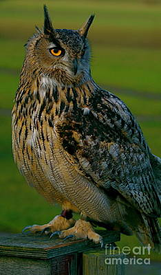 Art Print featuring the photograph Big Owl by Louise Fahy