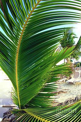 Photograph - Big Palm Leaf by John Rizzuto