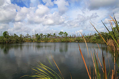Photograph - Big Pine Key Pond 2 by Bob Slitzan