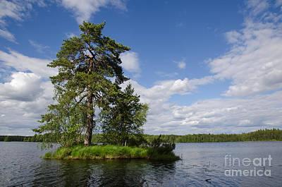 Photograph - Big Pine Tree At Small Island by Kennerth and Birgitta Kullman