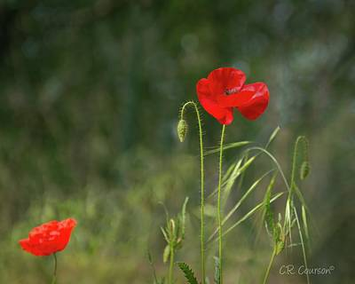 Photograph - Big Poppie Little Poppie by CR Courson