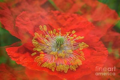 Abstract Flowers Royalty-Free and Rights-Managed Images - Big Poppy II by Veikko Suikkanen