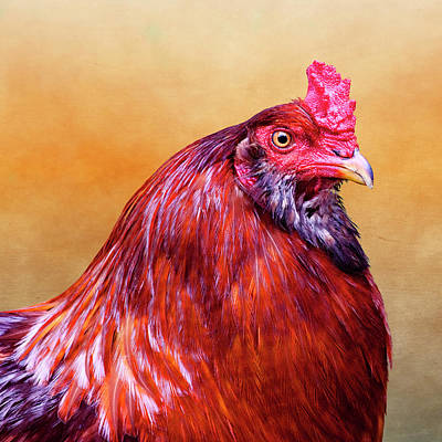 Big Red Rooster Art Print by Carol Leigh