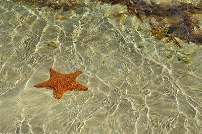 Photograph - Big Red Star by JAMART Photography