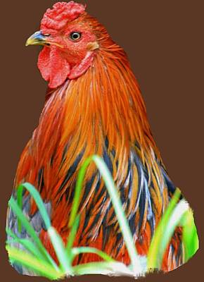 Photograph - Big Red The Rooster by Pamela Walton