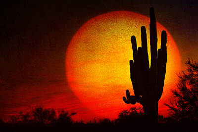 Photograph - Big Saguaro Sunset by James BO  Insogna