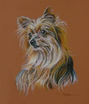 Pastel - Big Sister Silky Terrier by Mary Dove