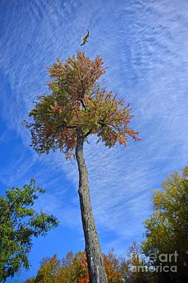 Photograph - Big Sky by Joshua McCullough