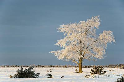 Photograph - Big Solitude Elm Tree In A Winter Landscape by Kennerth and Birgitta Kullman