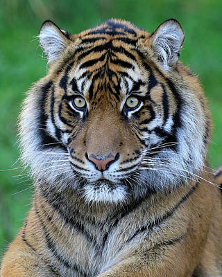 Photograph - Big Stare by Steve McKinzie