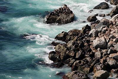 Photograph - Sea Swirls And Sea Lions  by Christy Pooschke
