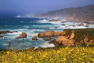 Big Sur Spring Beauty Print by Donna Kennedy