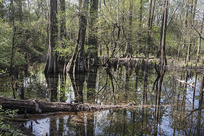 Photograph - Big Thicket National Preserve North Of Kountze by Carol M Highsmith