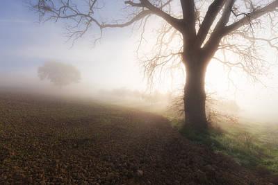 Photograph - Big Tree In A Fog by Nickolay Khoroshkov