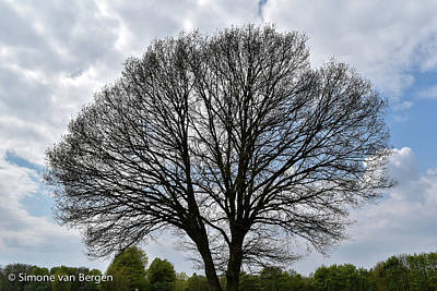 Photograph - Big Tree On A Cloudy Day by Simone Van Bergen