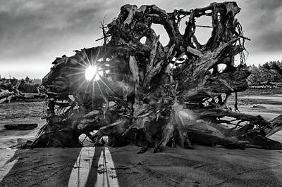 Photograph - Big Tree On The Beach At Sunrise In Monochrome by Kyle Lee