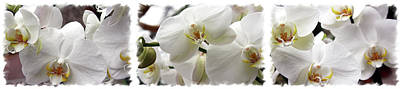 Photograph - Big White Orchids by Lali Kacharava