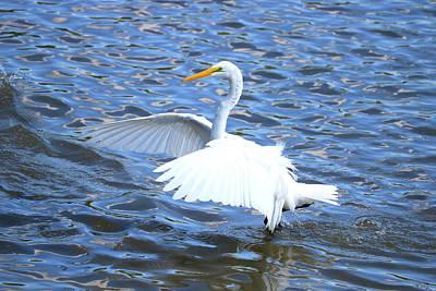 Photograph - Big Wings Walk by Tony Umana