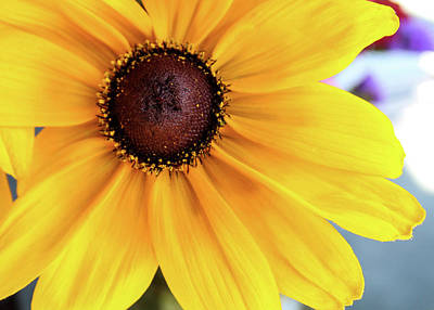 Photograph - Big Yellow by Alison Frank