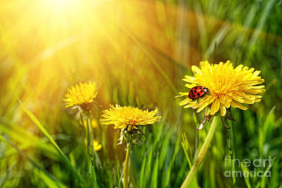 Big Yellow Dandelions In The Tall Grass Art Print