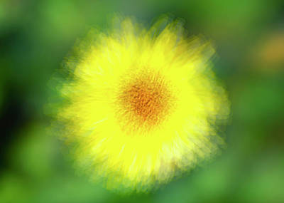 Photograph - Big Yellow Smile by Joseph S Giacalone